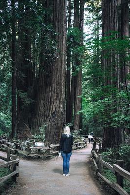 Muir Woods (California, USA) - example preset
