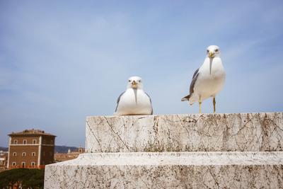 Birds in Rome, Italy - example preset