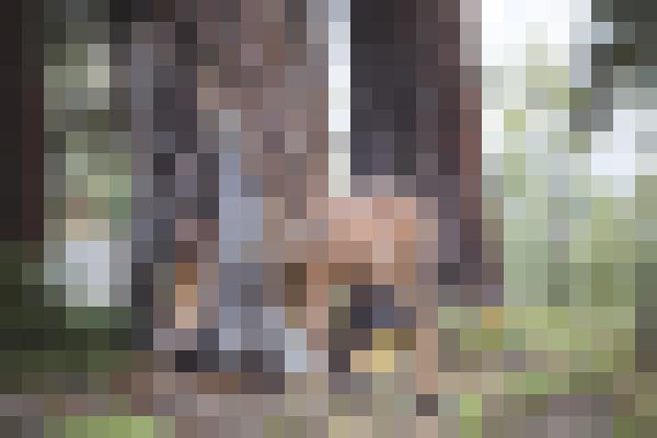 Plant, deer, wood, elk (2nxs1sng) - example preset