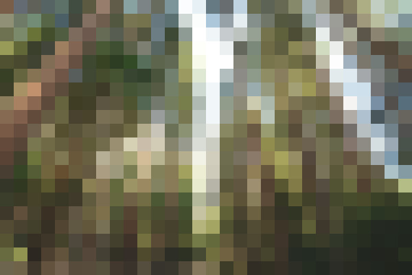 Sky, natural landscape, wood, tree (4srpkxhx) - example preset