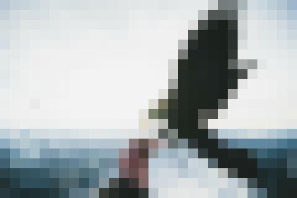 Sky, cloud, bird, snow (a91byymj) - example preset