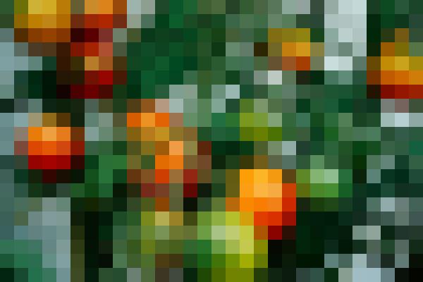 Food, plant, green, rangpur (godiac6t) - example preset