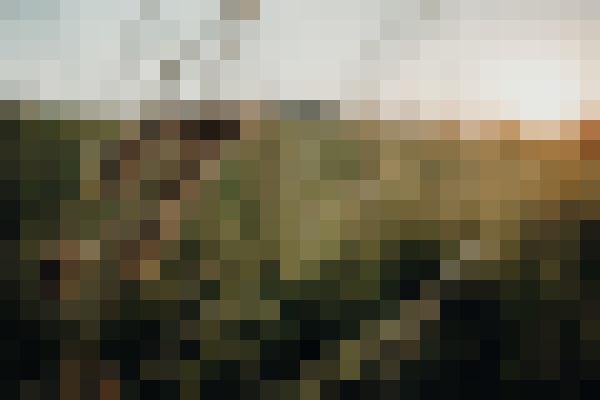 Plant, sky, natural landscape, grass (3cuzexme) - example preset