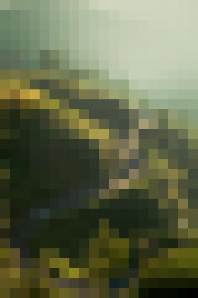 Plant, vegetation, natural landscape, sunlight (7nxd9smq) - example preset
