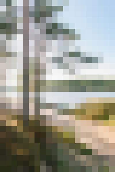 Plant, water, sky, natural landscape (7zfcjegd) - example preset