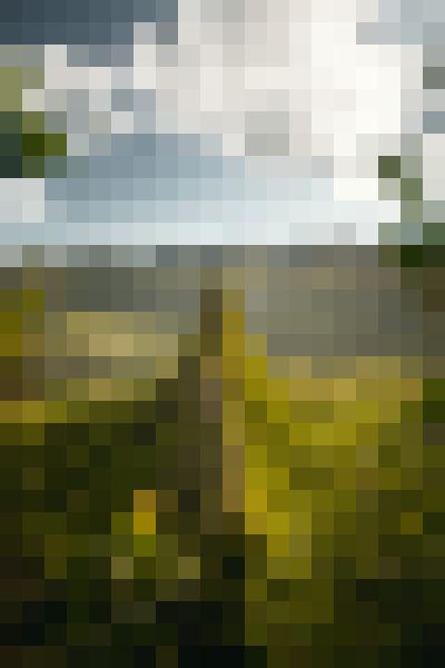 Portrait in nature (9hctn6qa) - example preset