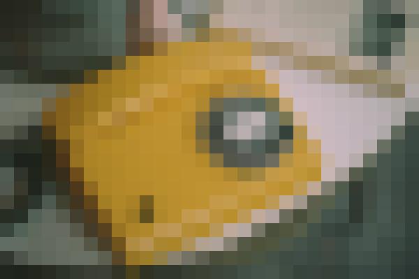 Gadget, font, computer hardware, hood (bsnt7ute) - example preset
