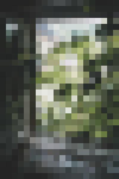 Window, plant, leaf, wood (kt3cfrrf) - example preset