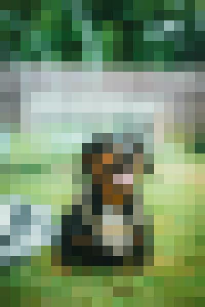 Dog, companion dog, grass, snout (scojs9nc) - example preset