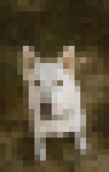 Dog, fawn, companion dog, working animal (stk971uy) - example preset