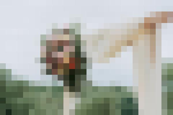 Wedding photo in nature (ynhdykgv) - example preset